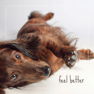 George the Dachshund Feel Better Card