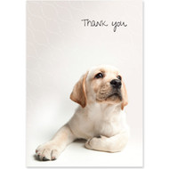Yellow Labrador Retriever Puppy Boxed Thank You Notecards