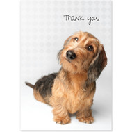 Wire Haired Dachshund Boxed Thank You Notecards