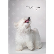 Happy Havanese Boxed Thank You Notecards