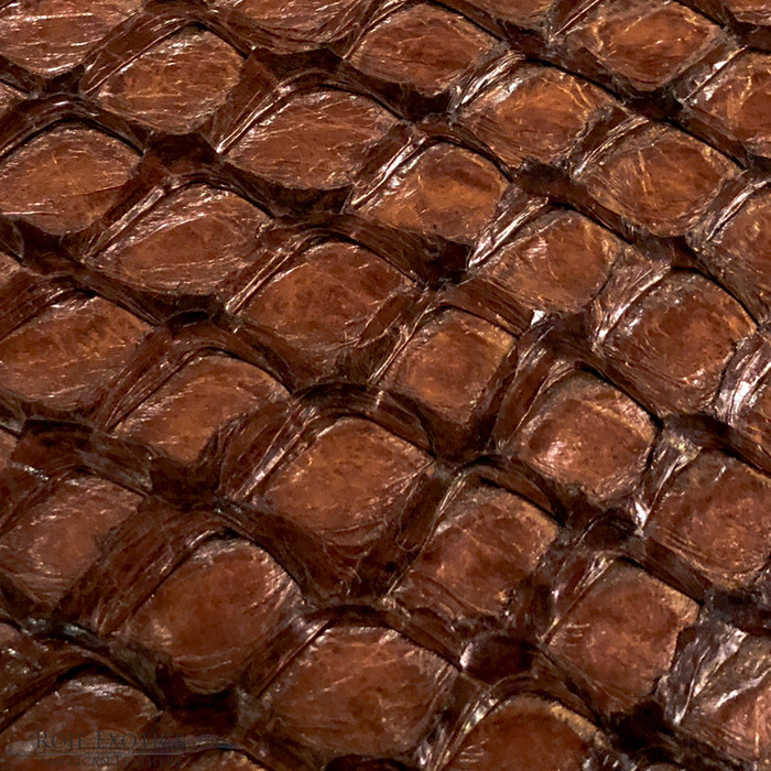 Pirarucu ( Arapaima) Chocolate Glazed-  XL