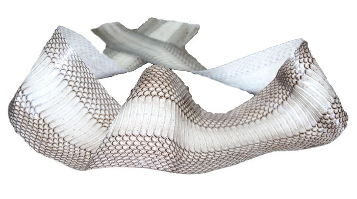 Genuine Cobra Snake Back Cut Skin - Glazed Finish in Natural