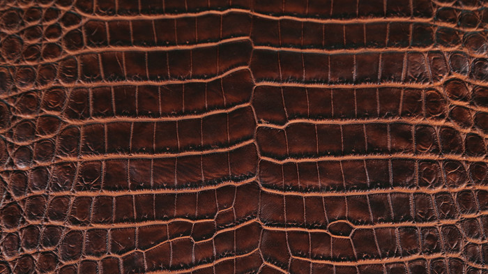 Nile Crocodile - 2 Tone - Chestnut Base & Cognac Under Scales
