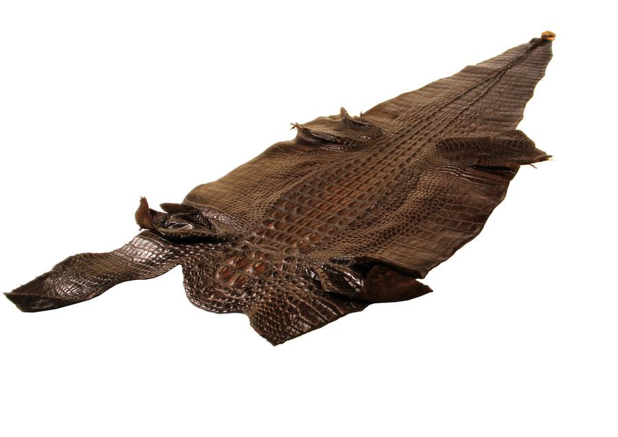 American Alligator Hornback - Dark Brown Waxy Millennium 40-44cm