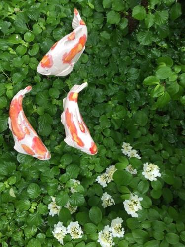 Kohaku koi garden art sold individually fish in the for Garden fish