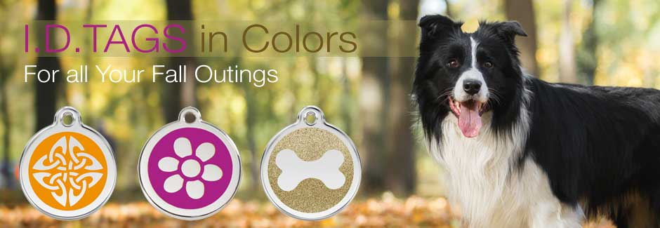 Dog ID Tags in Fall Colors
