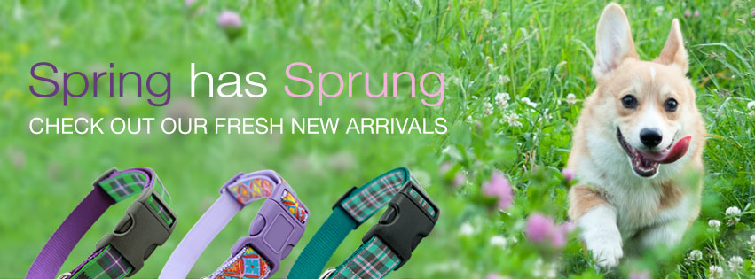 spring dog collars, stylish dog collars made in the usa