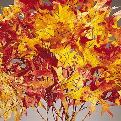 AUTUMN-red, orange, yellow