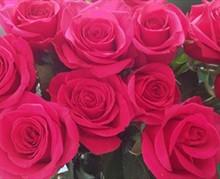 Queen Berry Rose