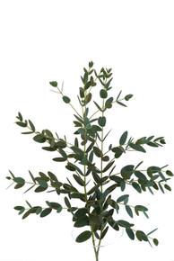 Eucalyptus-Parvi