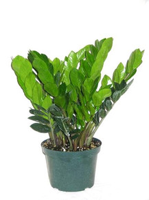 Z-Z Plant