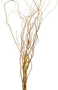 Curlywillow tips