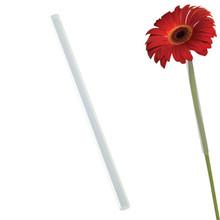 Gerbera Daisy Straws-Clear