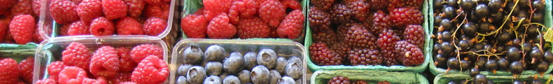 blueberry-1-.jpg