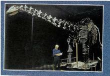 Apatosaurus (postcard) (2005)