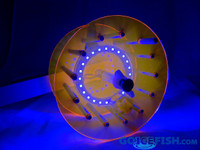 Northern Lights Orange Rattle Reel