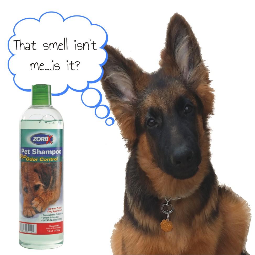 dog-shampoo.jpg