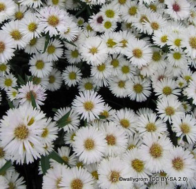 aster-snow-cushion-sim-pic-wallygrom-cc-by-sa-2.0-.jpg