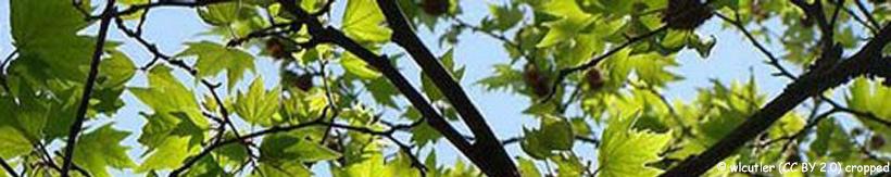 platanus-banner.jpg