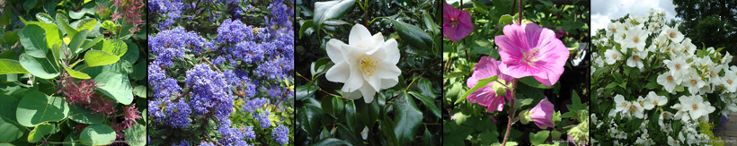 shrub-banner1.jpg
