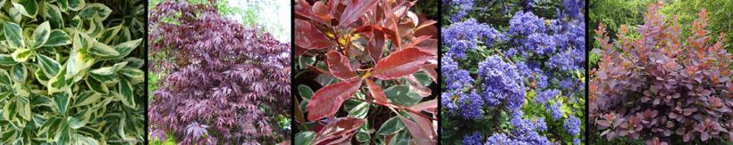 specimen-shrubs-climbers-banner.jpg