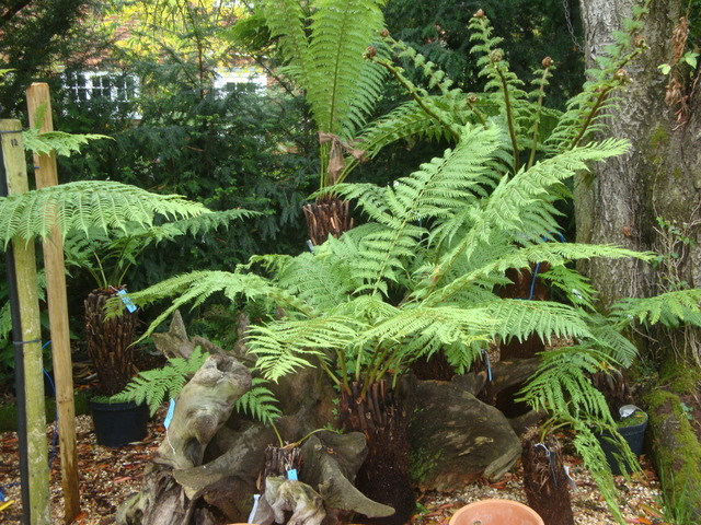 tree-fern-view2.jpg