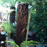 5ft Tree Fern