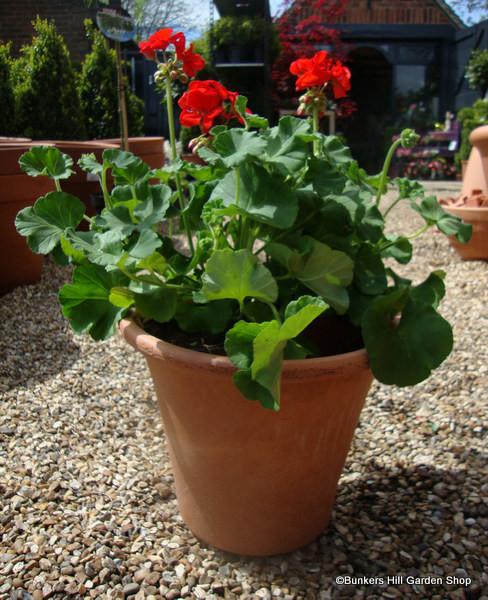 Yorkshire Flowerpot - Mini