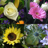 Flower selection in craft paper £30