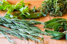 herbs-cat-image.jpg