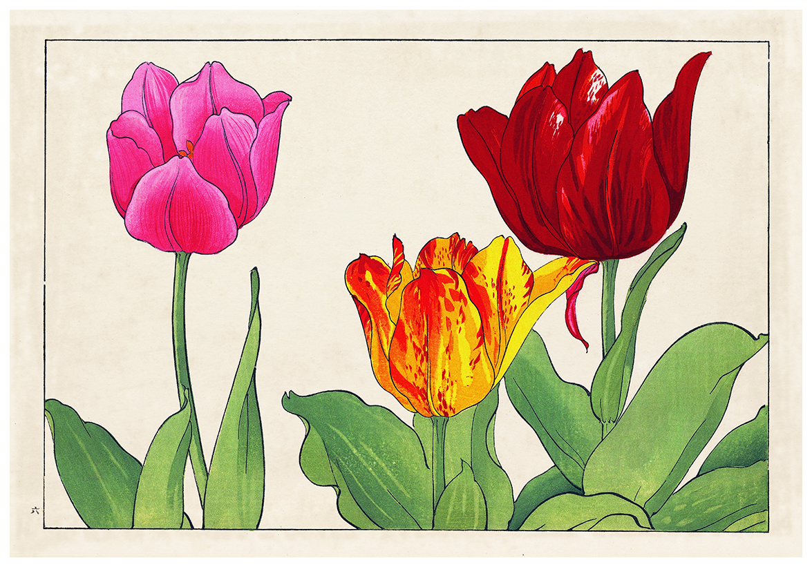 a-tulip2.jpg