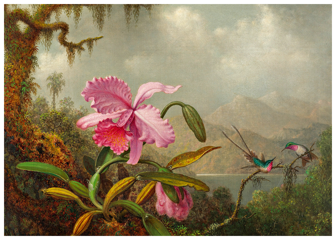 hummingbirds-and-orchids-by-martin-johnson-heade2.jpg