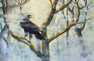 Wildlife Art - Still Wild, Still Threatened by Hazel Howie