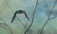 Wildlife Art - Shrike Force by Hazel Howie