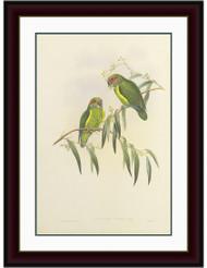 Coxen's Parakeet Mahogany Frame Gold Inlay