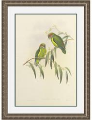 Coxen's Parakeet Silver Leaf Frame
