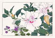 Hibiscus and Browallia