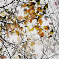 Autumn Song Print, Canvas or Stretched Canvas