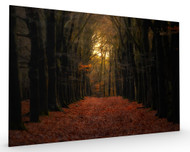 Forest Lane Stretched Canvas