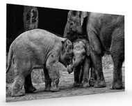 Friends Forever Stretched Canvas