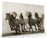 Horse Stretched Canvas