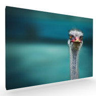 Ostrich Protecting Two Poor Chicken from the Wind Stretched Canvas