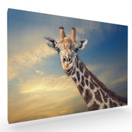 The Friendly Giant Stretched Canvas