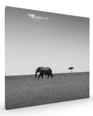 Elephant and Friend, Stretched Canvas
