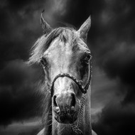 Head in the Clouds, Print, Canvas or Stretched Canvas