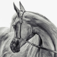 The Arabian Horse, Print, Canvas or Stretched Canvas