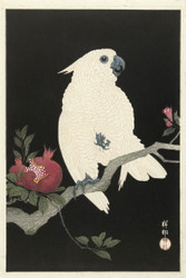 Cockatoo and Pomegranate by Watanabe Shozaburo