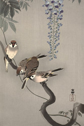 Tree Sparrows in Wisteria by Ohara Koson