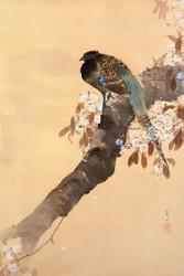 Pheasant on Kersenbloesemtak by Ohara Koson
