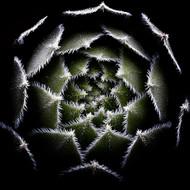Art Print Sempervivum rosette by Victor Mozqueda